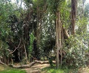 world Environment Day : ਪੰਜਾਬ ਦੇ ਇਸ ਪਿੰਡ 'ਚ 300 ਸਾਲ ਪੁਰਾਣਾ ਸਾਢੇ ਤਿੰਨ ਏਕੜ 'ਚ ਫੈਲਿਆ ਹੈ ਸਭ ਤੋਂ ਵੱਡਾ ਬੋਹੜ,ਦੇਖੋ ਤਸਵੀਰਾਂ