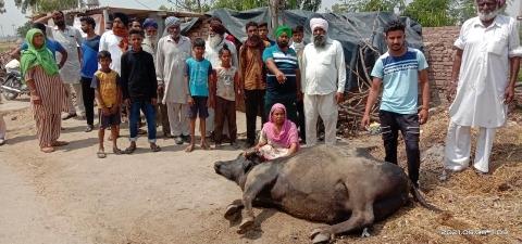 village jodpur people are worried