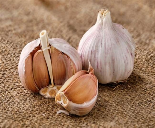 Black garlic is useful in many diseases know its medicinal benefits