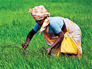 PM Kisan Samman Nidhi 2021: ਸਰਕਾਰ ਨੇ ਜਨਰੇਟ ਕੀਤਾ FTO, ਹੁਣ ਇਕ-ਦੋ ਦਿਨਾਂ 'ਚ ਆ ਜਾਵੇਗੀ 8ਵੀਂ ਕਿਸ਼ਤ