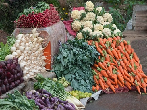Suitable time for cultivation for growing winter vegetables