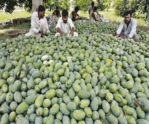 Pakistan Mango Diplomacy fails mangoes sent back as gifts by China and US