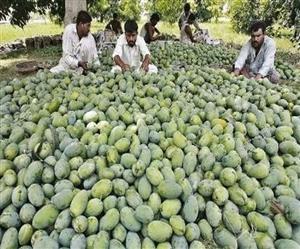 ਪਾਕਿਸਤਾਨ ਦੀ Mango Diplomacy ਫੇਲ੍ਹ, ਚੀਨ ਤੇ ਅਮਰੀਕਾ ਨੇ ਵਾਪਸ ਕੀਤੇ ਗਿਫ਼ਟ ਦੇ ਰੂਪ 'ਚ ਭੇਜੇ ਗਏ ਅੰਬ