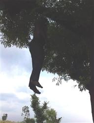 ਖੇਤਾਂ 'ਚ ਦਰੱਖਤ ਨਾਲ ਲਟਕਦੀ ਮਿਲੀ ਲਾਸ਼, ਦਿਮਾਗੀ ਪ੍ਰੇਸ਼ਾਨੀ ਕਾਰਨ ਕੀਤੀ ਖੁਦਕੁਸ਼ੀ