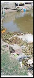 ਨਹਿਰ 'ਚ ਮਰੇ ਪਸ਼ੂ ਫੱਸਣ ਕਾਰਨ ਰਾਹਗੀਰਾਂ ਲਈ ਪਰੇਸ਼ਾਨੀ