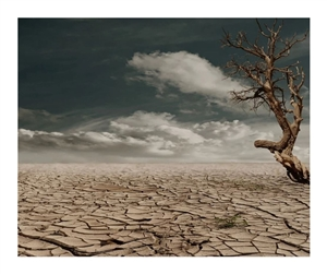 World Day to Combat Desertification and Drought : ਜਾਣੋ ਇਸ ਦਿਨ ਦਾ ਮਹੱਤਵ