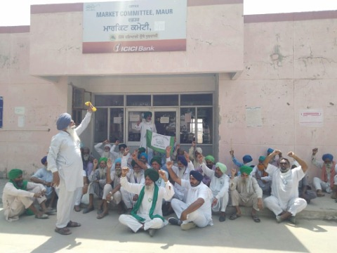 Due to the shortage of bags, the farmers staged a dharna in front of the market committee punjabijagran news