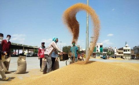 Wheat Procurement Challenges Punjab Govt  farmer disturbed punjabijagran news