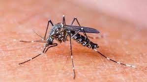 Dengue outbreak continues seven die in Uttar Pradesh