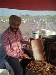 Beekeeper Jagtar Singh became an example for the youth
