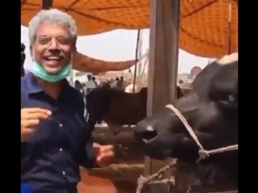 Viral Video: ਜਦੋਂ ਪਾਕਿਸਤਾਨ ਪੱਤਰਕਾਰ ਨੇ ਮੱਝ ਦਾ ਲਿਆ ਇੰਟਰਵਿਊ, ਪੁੱਛਿਆ- ਲਹੌਰ ਆ ਕੇ ਕਿੰਝ ਲੱਗਾ, ਇਹ ਮਿਲਿਆ ਜਵਾਬ