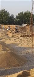 ਡੱਲਾ ਮੰਡੀ 'ਚ ਝੋਨੇ ਦੀ ਖ਼ਰੀਦ ਜ਼ੋਰਾਂ 'ਤੇ : ਡੱਲਾ