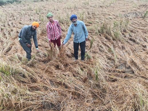 Order of crop damage due to heavy hailstorm and rains   ਭਾਰੀ ਗੜ੍ਹੇਮਾਰੀ ਤੇ ਬਾਰਸ਼ ਕਾਰਨ ਫ਼ਸਲਾਂ ਦੇ ਨੁਕਸਾਨ ਦੀ ਗਿਰਦਾਵਰੀ ਦੇ ਆਦੇਸ਼
