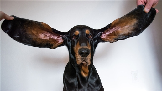The dog name is listed in the Guinness Book of Records you will be surprised to know the quality