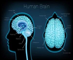 How To Boost Brain : ਜੇਕਰ ਤੁਸੀਂ ਆਪਣੀ ਯਾਦਸ਼ਕਤੀ ਵਧਾਉਣਾ ਤੇ ਦਿਮਾਗ ਤੇਜ਼ ਕਰਨਾ ਚਾਹੁੰਦੇ ਹੋ ਤਾਂ ਫਾਲੋ ਕਰੋ ਇਹ ਆਸਾਨ ਟਿਪਸ