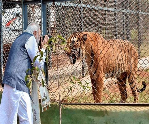 International tiger day pm modi congratulates wildlife lovers reiterates commitment to ensure safe habitat for tigers