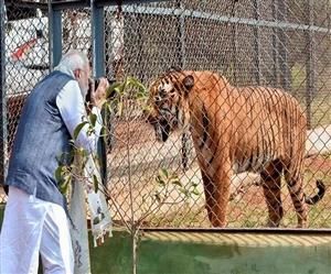 International Tiger Day: ਪੀਐੱਮ ਮੋਦੀ ਨੇ Wildlife Lovers ਨੂੰ ਦਿੱਤੀ ਵਧਾਈ, ਸ਼ੇਰਾਂ ਦੇ ਲਈ ਸੁਰੱਖਿਅਤ ਆਵਾਸ ਨਿਸ਼ਚਿਤ ਕਰਨ ਦੀ ਵਚਨਬੱਧਤਾ ਦੁਹਰਾਈ