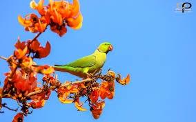 World Parrot Day 2021: ਜੰਗਲਾਂ 'ਚ ਘੱਟ ਹੋਈ ਤਾਂ ਸ਼ਹਿਰੀ ਖੇਤਰਾਂ 'ਚ ਵਧੀ ਤੋਤਿਆਂ ਦੀ ਗਿਣਤੀ