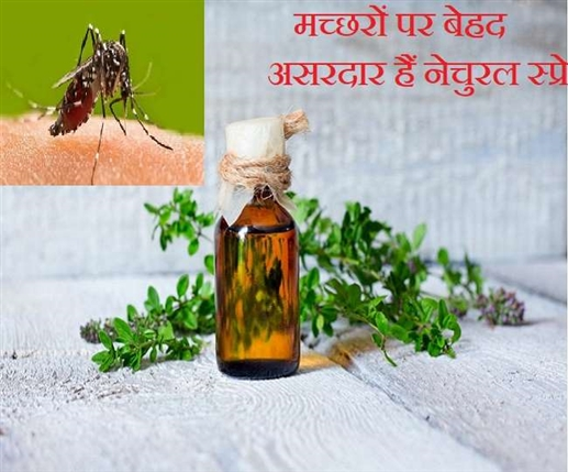 If you are bothered by mosquitoes in the rain then make a natural spray at home